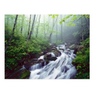 Linn Cove Creek cascading through foggy Postcards