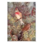 Linnent Birds Vintage Illustration Photo Print