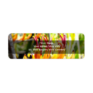 Lino de florecimiento de Nueva Zelanda