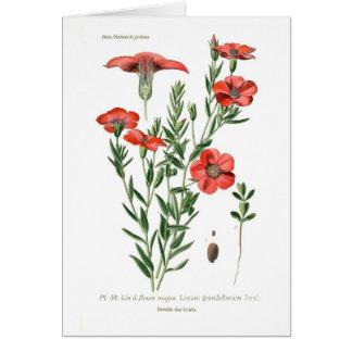Linum grandiflorum card