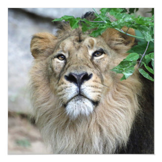 Lion20150605 Magnetic Card