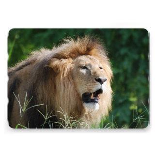 lion-112