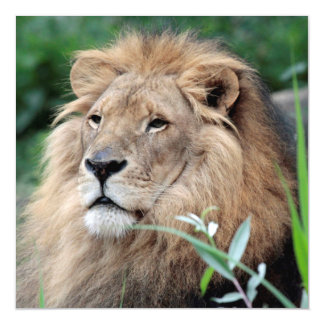 Lion_2015_0801 Magnetic Card