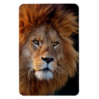Lion_20180712_by_JAMFoto
