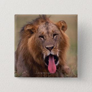 Lion 2 button