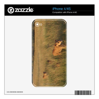 Lion 2 decals for iPhone 4