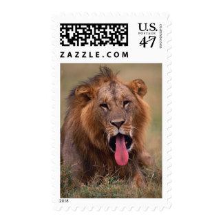 Lion 2 postage stamp