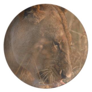 Lion 3 melamine plate