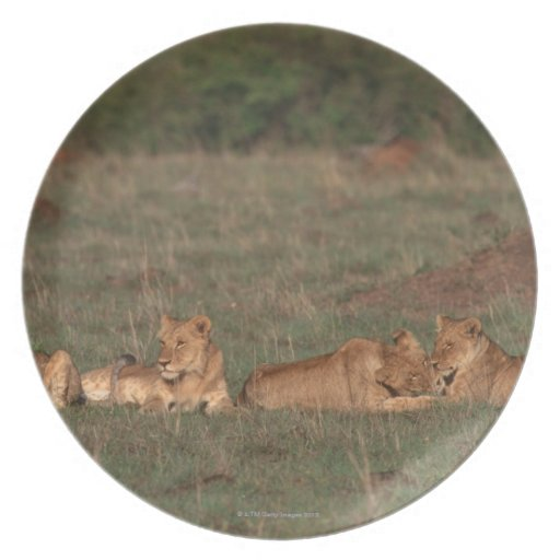 Lion 4 party plate