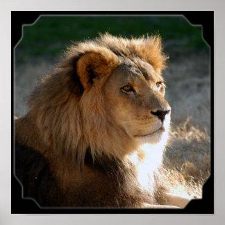 Lion-6775e11x11fram africano impresiones