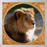 Lion-6775e-ram-b africano impresiones