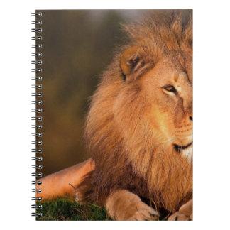 lion-794962.jpg notebook