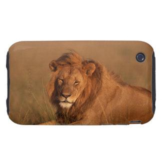 Lion 8 tough iPhone 3 cover
