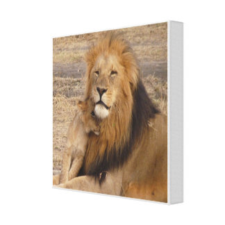Lion and cub stretched canvas prints