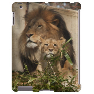 Lion and cub in the grass