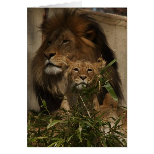Lion and cub in the grass greeting cards