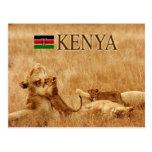 Lion and cub, Tsavo, Kenya Postcard