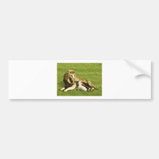 Lion and Lamb Car Bumper Sticker
