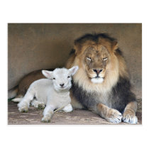 Lion and Lamb Postcard