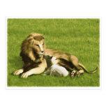 Lion and Lamb Postcard