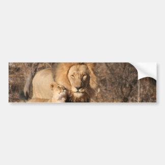Lion and Lion Cub Bumper Sticker