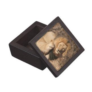 Lion and Lion Cub Premium Gift Box