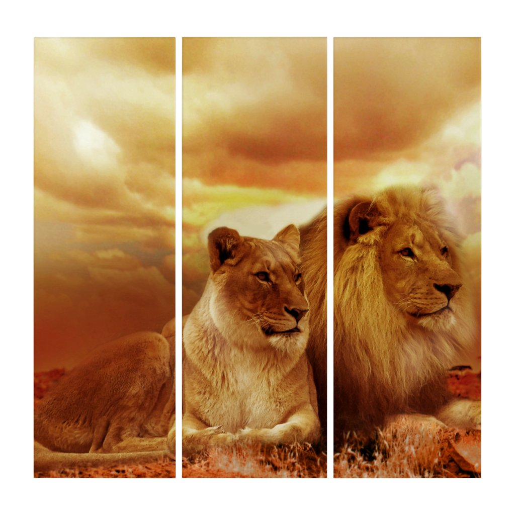 Lion and Lioness AcryliPrint®HD Triptych Wall Art (3) 36