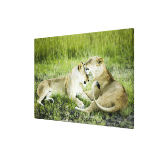 Lion and lioness, Africa 2 Canvas Print