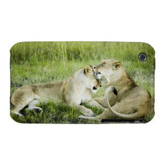 Lion and lioness, Africa 2 iPhone 3 Cover