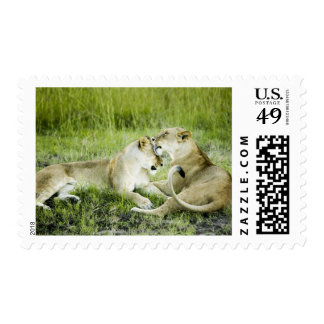 Lion and lioness, Africa 2 Postage