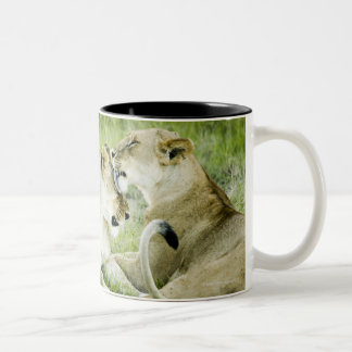 Lion and lioness, Africa 2 Two-Tone Coffee Mug