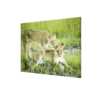 Lion and lioness, Africa Canvas Print