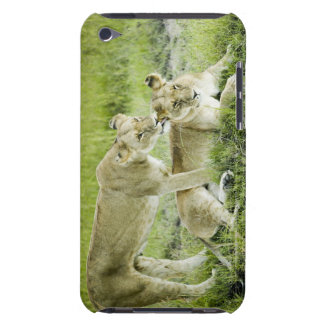 Lion and lioness, Africa Case-Mate iPod Touch Case