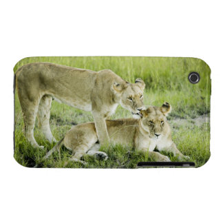 Lion and lioness, Africa iPhone 3 Covers