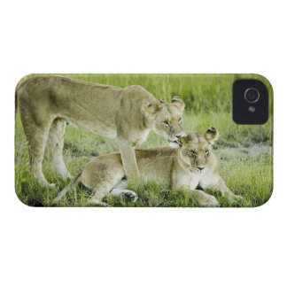 Lion and lioness, Africa iPhone 4 Case