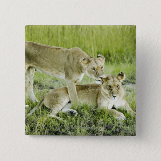 Lion and lioness, Africa Pinback Button
