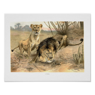 Lion and Lioness African Savannah Print