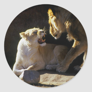 Lion and lioness growl sticker