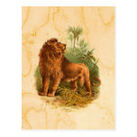 Lion and Palm Trees Vintage Postcard