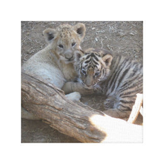Lion and Tiger Cub Canvas Canvas Prints