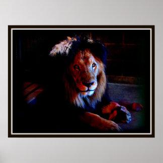 Lion at Dusk Poster