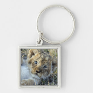 Lion baby keychain