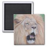 Lion big cat wildlife realist art magnet magnets