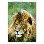 Lion  Birthday Card at Zazzle