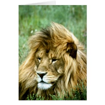 Lion  Birthday Card by Artnmore at Zazzle