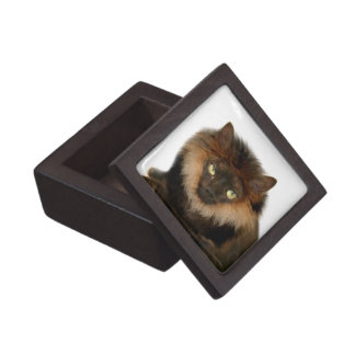 Lion cat keepsake box