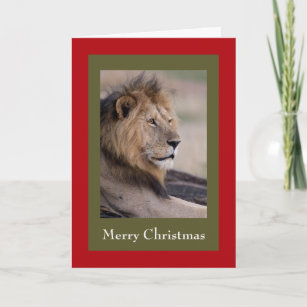 Wildlife Christmas Cards.Lion Christmas Cards Holiday Card