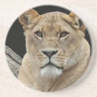 Lion Drink Coasters