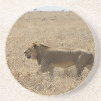 Lion Coasters