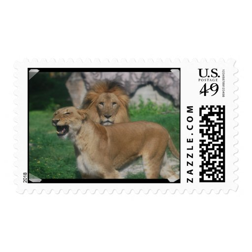 Lion Couple Postage Stamps